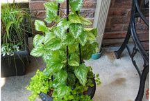 Porch & Patio Plants