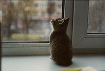 Cute Animals / by Liz Schelske