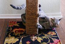 Gatos juguetes