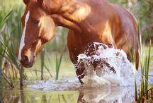 Horses♡♡