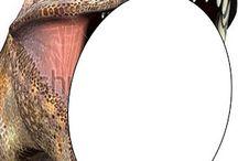 φωτο δεινοσαυαρος