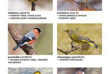 talviruokinnan linnut