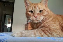 i miei adorati pelosetti♡♡♡ / ♡♡♡♡  gatti. I l♡ve you♡♡♡