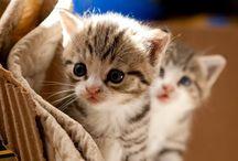 Kediler / Kedıcıkler