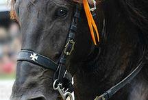 Menorca ❤️ of Horses
