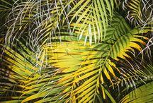 Hiperrealismo - Palmas y palmeras / Cocos palmas, palmeras y cocos pintados por maestros del hiperrealismo. / by Galería Hiperrealista