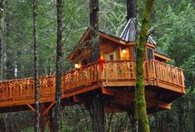 Forest chalets