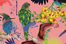 uccelli disegni