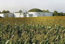Energy crops for biogas