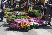 Mostra floreale! Beautiful flowers in a sunny day