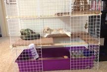 cage rabbit