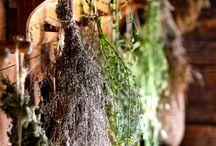 piante aromatiche e non secche
