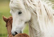 Beautiful Animals / Photos of beautiful animals.