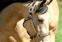 Horses I want