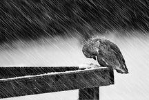 Rain, snow, world.