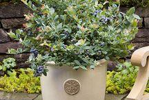 garden creations
