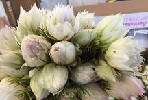 Serruria florida / Blushing brides as they're called are a white/pale pink flower widely used in bridal bouquets. It is a beautiful dainty, long lasting flower.