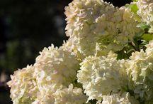 Blomster i hagen - ønskeliste