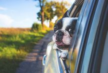 It's Fields Auto Group, #PetPhotoSunday! Snap a photo of your pet with your car from Fields & share with us. You may see it on our social pages.