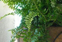 Care of indoor plants