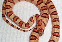 Snakes / by Mark Sullivan