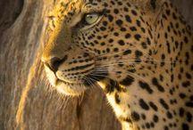 Chris Bray Photography Safaris