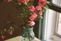 Plants & Flowers / Flowers, Gardens, Plants
