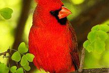 Птицы / Птицы