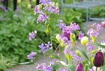 Garden / Hage / Have / Trädgård / Hager som dukker opp på min vei og som kan inspirere andre, inklusiv min egen! http://furulunden.blogspot.no