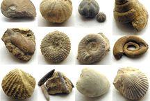 Fósiles y Piedras