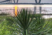 Bridges / by Rebecca Leftwich