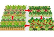Anbau Gemüse