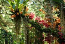 Las orquideas