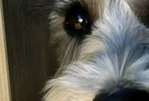 futroff dog grooming