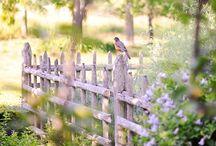 Płoty i ogrody