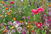 Blomster / Haver / Gardens / Flowers
