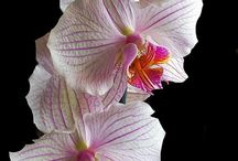 Orchids Obsession / by Barry Okner