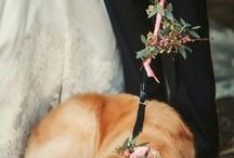 Pets In Weddings / by Bridal Expo Chicago/Milwaukee Luxury Events
