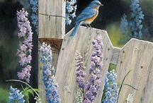 Пташки Birdie / красота пернатых