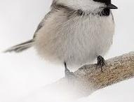 birds   linnut