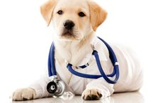 http://thedogtoronline.net/ / Register online So as to claim an emotional support animal, individual will require a close down letter from their doctors.