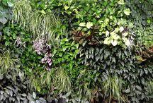 AW green wall