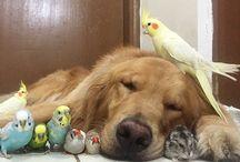 animali in compagnia