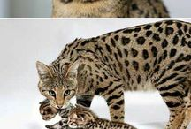 Kitty's & Cat's