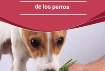 Tratamientos de ANIMALES