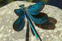 Dragon Fly / by Michelle Robert-Harrison