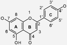 apigenin and cancer prevention