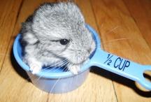 Cute! / by Carlie Keffer