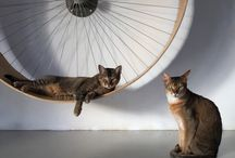 the cats wheel exercises by holindesign / our cute cats and our wheel