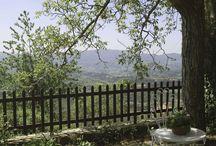 Verde e Piscina / Esterni di Villa Treggiano
